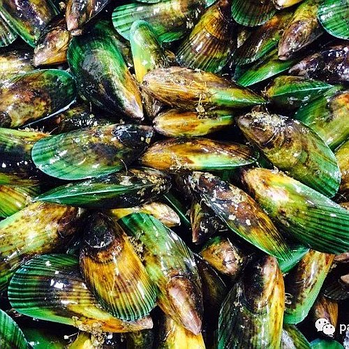 Natural New Zealand Green Lipped Mussel
